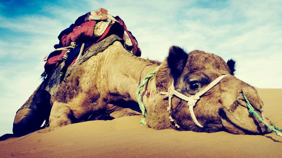 The Straw That Broke the Camel's Back: The Airlines Have Gone Too Far